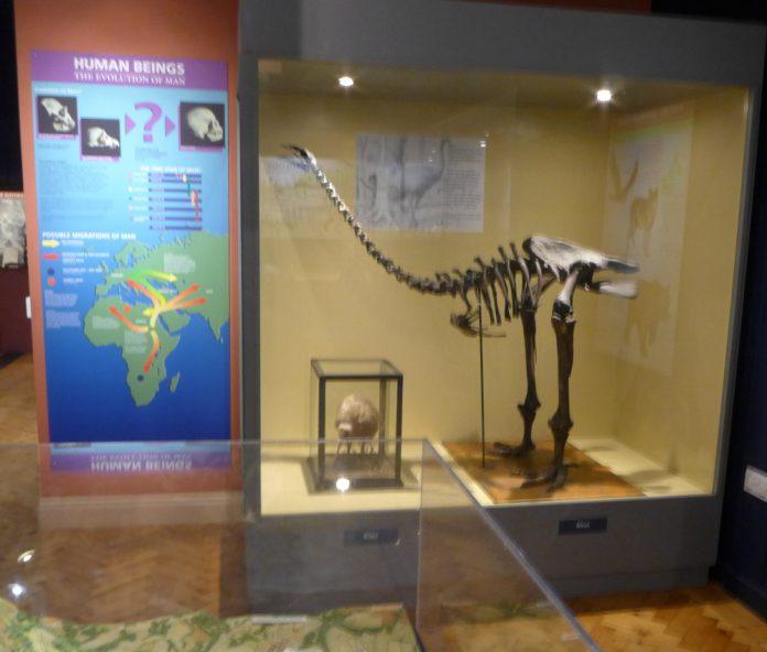 Dinosaur Display Haslemere Museum
