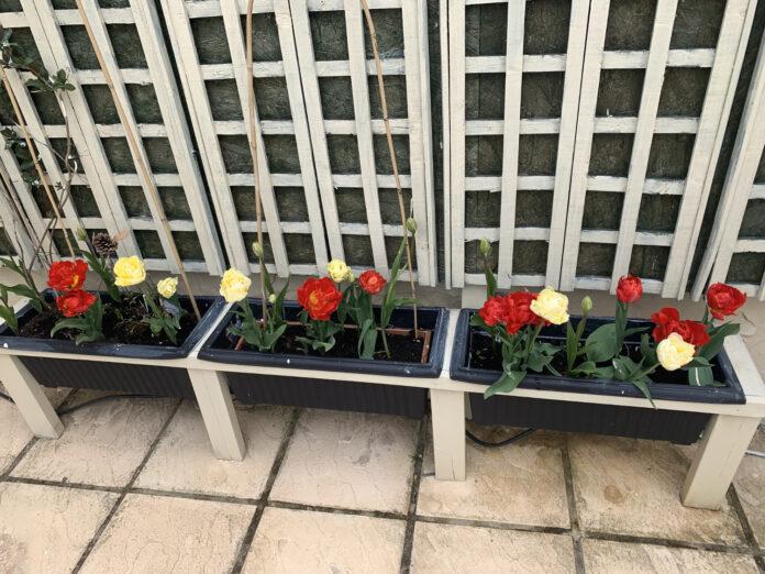 Meditterranean raised planters