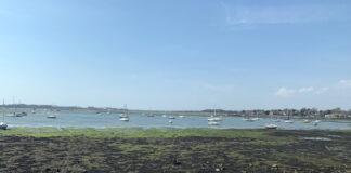 Throney Island shoreline Hampshire